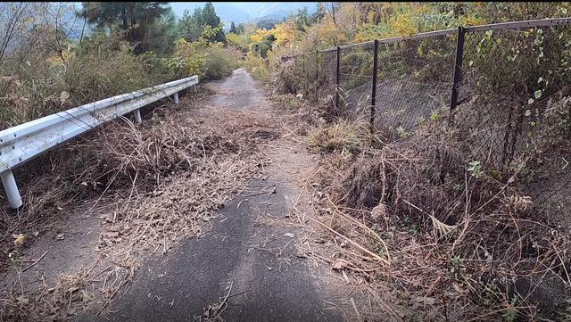 画像: よし林道だ。