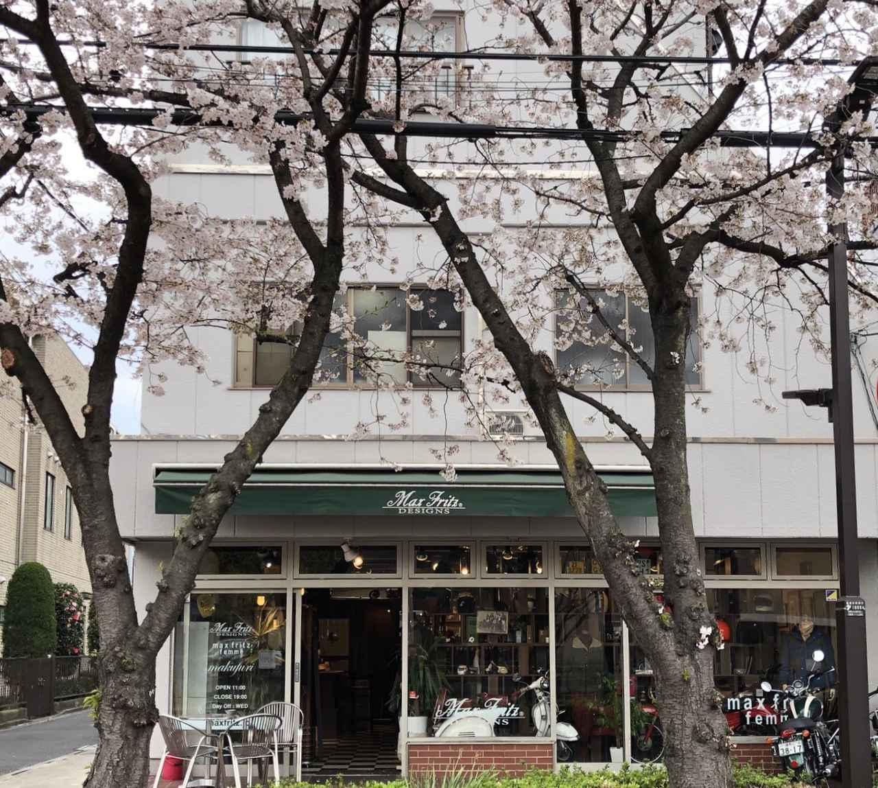 画像1: この時期、MaxFritz本店前の桜並木は満開になっている事でしょう。 MaxFritzで買物しながら桜と珈琲を楽しめます。