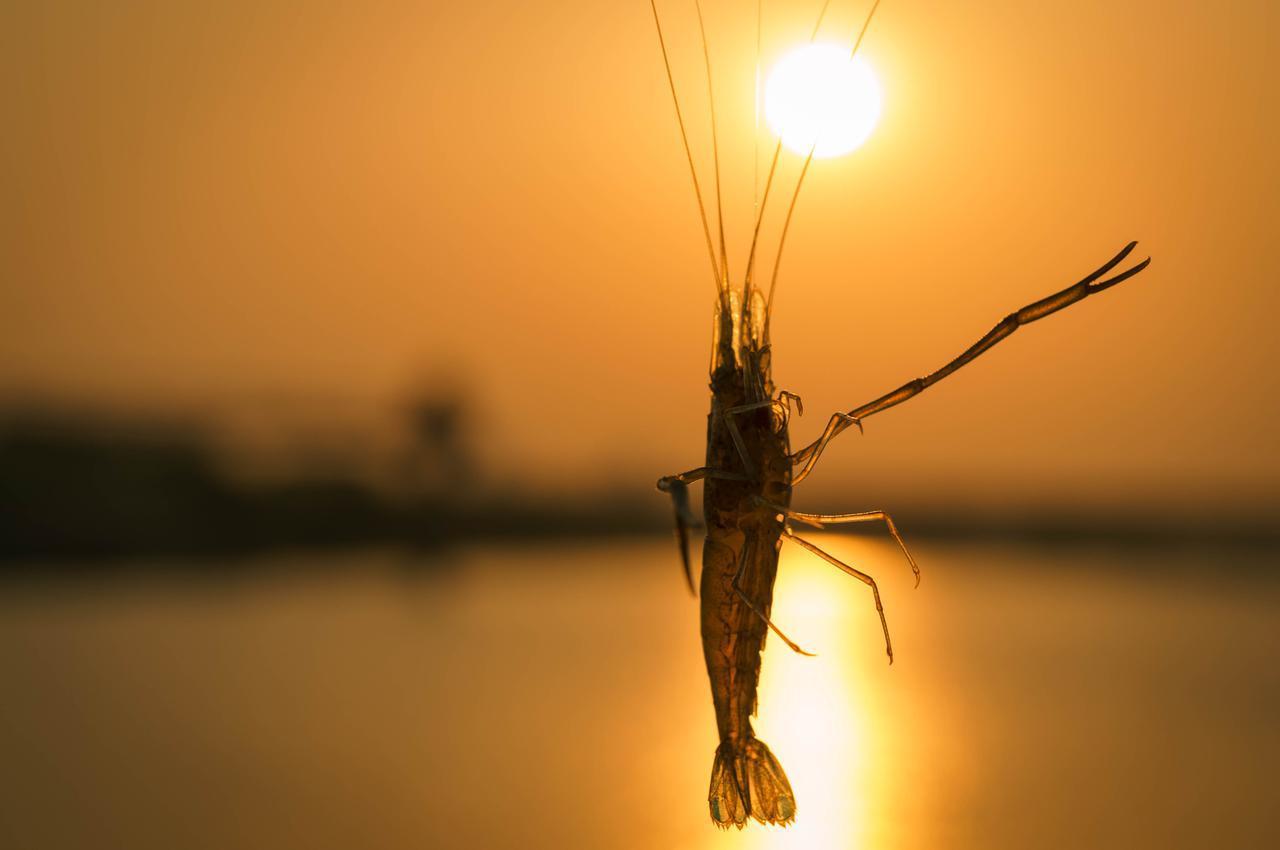 画像: テナガエビ釣り