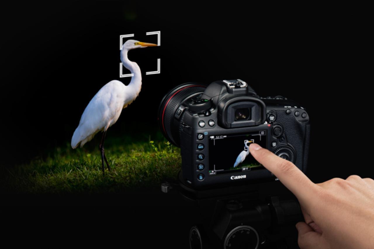 画像: タッチパネルを採用した液晶モニターにより、ファインダーを覗かないライブビュー撮影でも任意のポイントにAF(オートフォーカス)ポイントを設定できる。