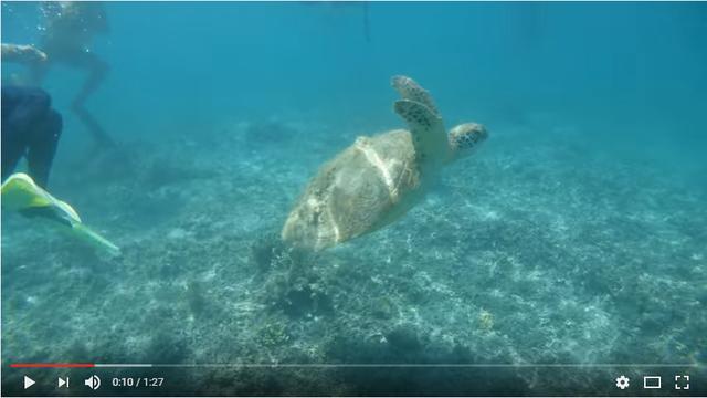 画像: 動画の再生画面(一部)。海中でも鮮明な動画撮影が楽しめます。動画は上の画面をクリックしてください。撮影:水咲奈々 youtu.be