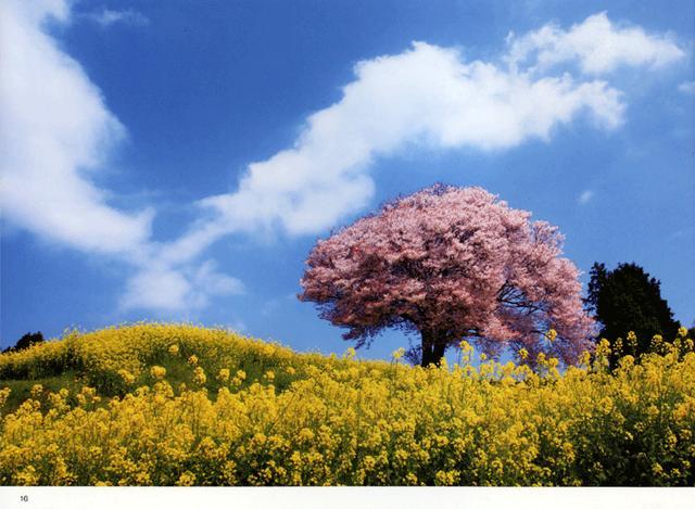 画像1: 「日本の自然美を撮る 米美知子 傑作選-季節の贈り物-」より引用