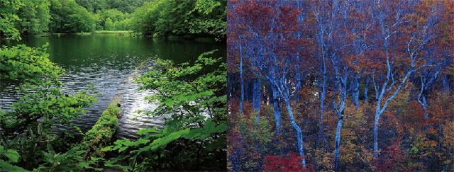 画像2: 「日本の自然美を撮る 米美知子 傑作選-季節の贈り物-」より引用