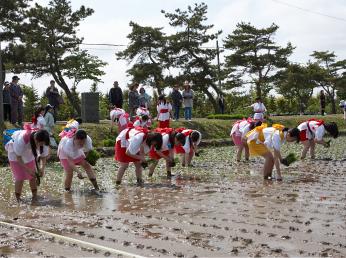 画像: 五農の伝統行事「田植え祭り」