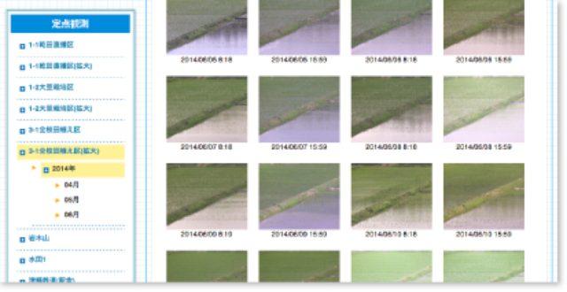 画像: 水田の定点観測画像を掲載したページ