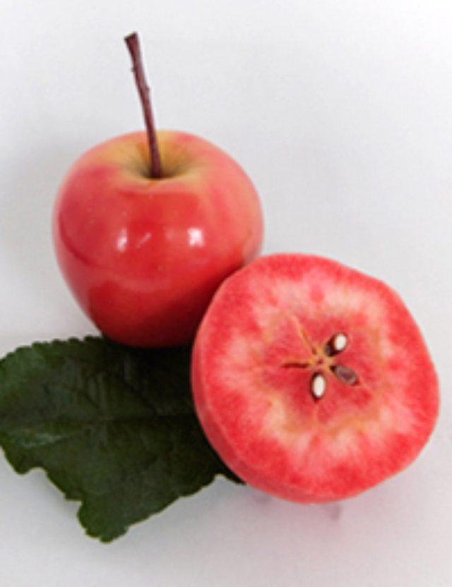 """画像: 果肉まで赤いリンゴ""""御所川原"""" 画像提供:五所川原6次産業化推進協議会"""
