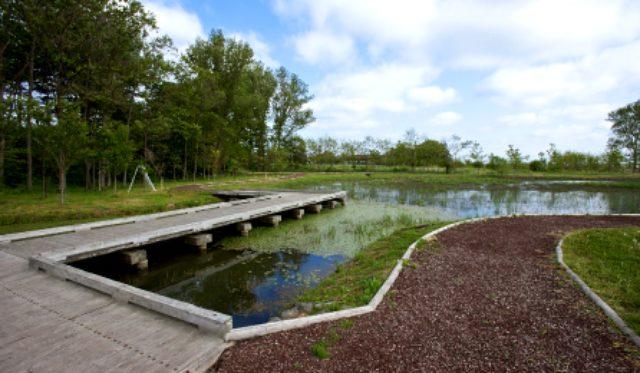 画像: 五所川原農林高校構内のビオトープ