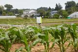 画像: 横浜市の郊外にあるアグリイノベーション大学校関東校の農場に設置されたe-kakashiの子機(中央)