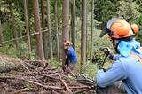 画像: 社有林の伐採の様子。木を山側に倒すため、上部からワイヤーで引っ張った状態で伐採する。