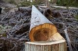 画像: 林業の仕事は30年単位