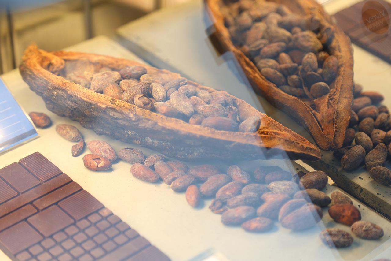 画像: カカオの実に含まれるカカオ豆はおよそ50粒。仮にカカオ100%の板チョコ1枚50gをつくる場合、カカオの実まるまる1個が必要となる。