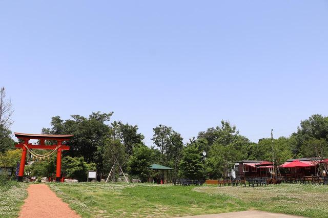 画像: 三富今昔村の敷地内には、自然だけでなく神社やカフェも。近隣住民にとっての憩いの場にもなっている。
