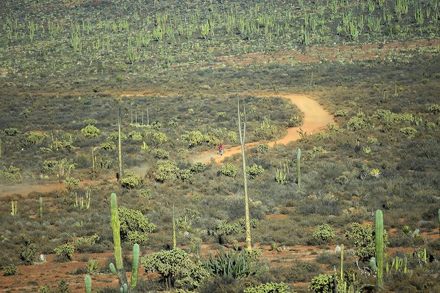 画像: BAJA1000はこうした荒野でヨーイ・ドンするレースです。コースの距離は1400kmくらい。photo by Kmikami