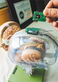 画像: 図1 脳に埋め込むチップのモックアップ 出典:台湾交通大学