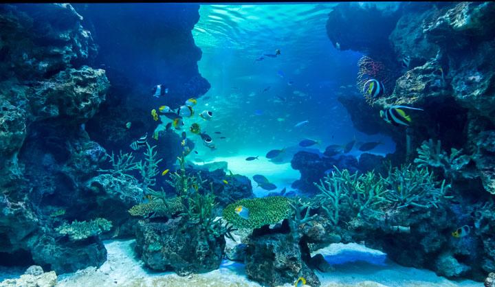 画像: 感動する水族館を生んだ「顧客視点のプロデュース」とは?(前編)-水族館のプロデュースはマーケティングから:プロフェッショナルから学ぶ「仕事の心」第5回(2016年7月12日号)