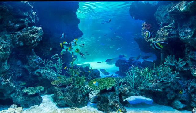 画像: プロフェッショナルから学ぶ「仕事の心」第5回:感動する水族館を生んだ「顧客視点のプロデュース」とは?(前編) -水族館のプロデュースはマーケティングから(2016年7月12日号)