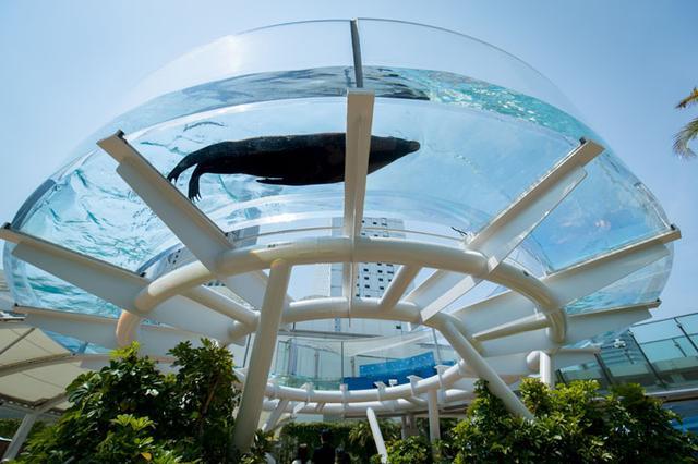 画像2: -今後どんな水族館をつくっていきたいですか。