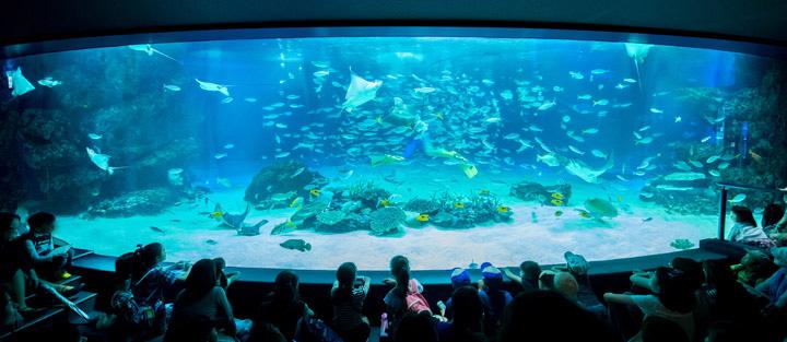 画像: -サンシャイン水族館で一番大きな水槽でも240トンだと伺いました。240トンは大水槽としては少ない方だと思うのですが、どうやって水塊を表現するのでしょうか。