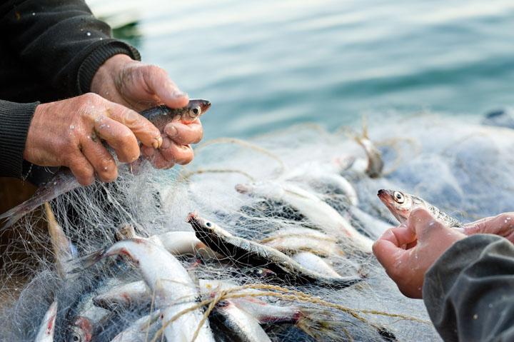 画像: ―なぜ水産業界へ参入されたのでしょうか?前職が介護・医療業界ということですが。