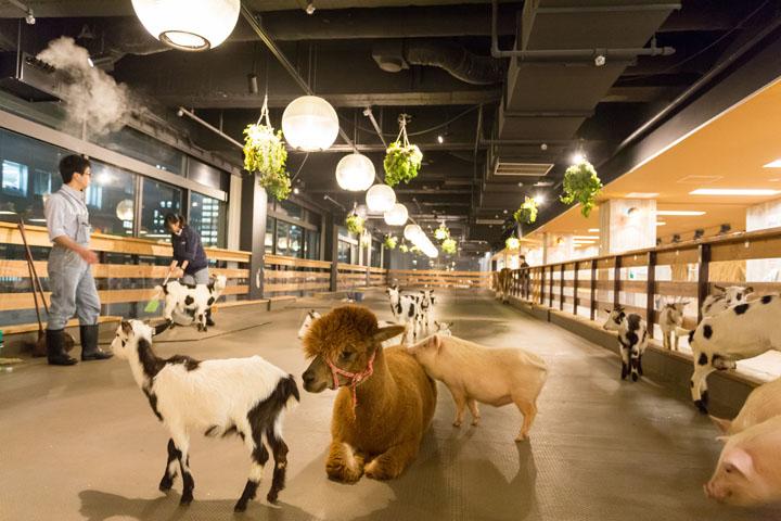 画像: オールスター勢ぞろいです!飼育員さんは、動物のフンをすばやく掃除することを心がけています!