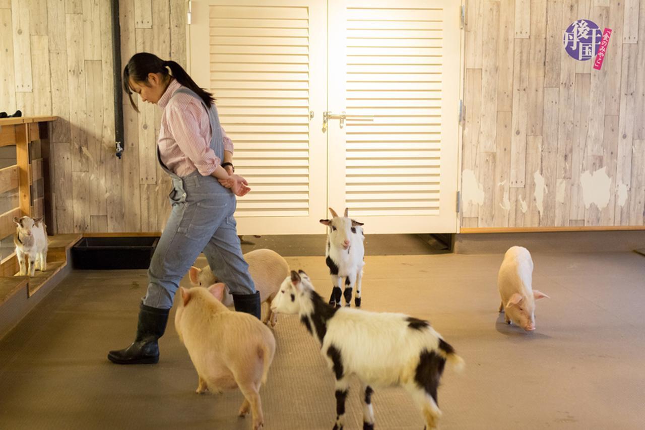 画像: 珍しいシロクロのヤギさん。白ヤギと黒ヤギのかけあわせだそうです。