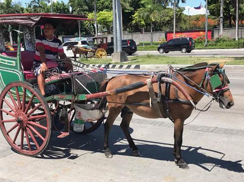 画像: カレッサと呼ばれる馬車