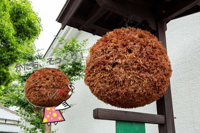 画像1: いい酒は米が違う!? 米作りから手掛ける泉橋酒造を突撃取材!(2018年8月7日号)