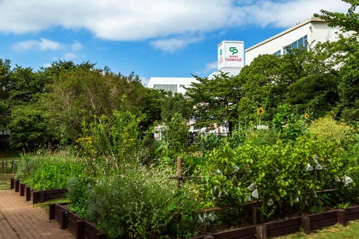 画像: 庭人が定期的に手入れをしています。