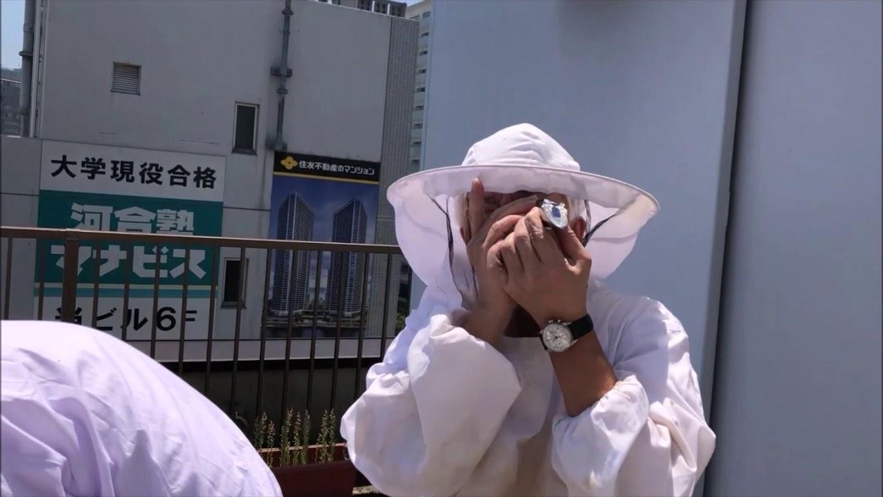 画像: 豊洲でハチミツ採取の現場を見てきました~ #トヨスの人 第3回 取材こぼれ映像 www.youtube.com