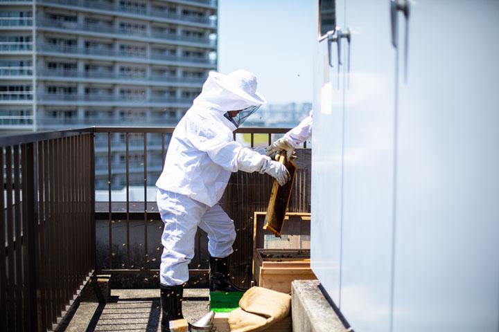 画像: ビル屋上に設置されたハチの巣箱。元気に飛び回るハチにも慣れたもの。メンバーの連係プレーで作業が進む