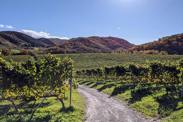 画像: 北海道では新しいワイナリーが毎年のように立ち上がり、ぶどう畑も増えています