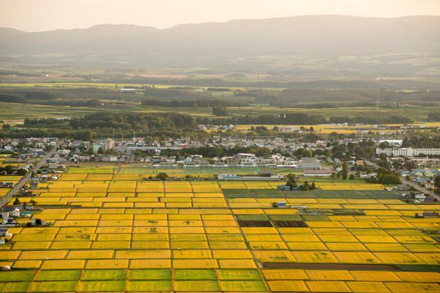画像: 東川町は北海道内でも有数の米どころです