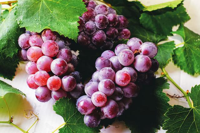 画像: ラブルスカ品種はみずみずしさが特徴なので、ワインにするとヴィニフェラに比べて濃縮味が弱く(水っぽく)なります