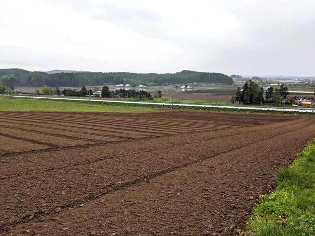 画像: 土壌調整がすべて終わって整地した直後の様子。土を起こした直後の畑はふかふかで気持ちいい