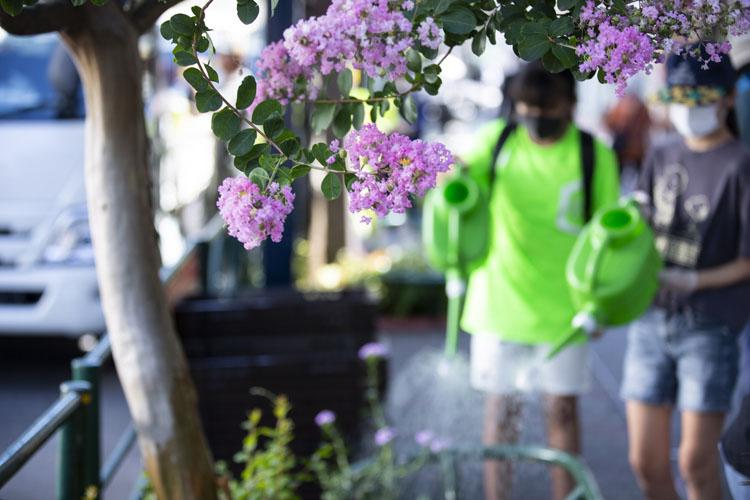 画像: 街路樹のサルスベリも咲く都道沿い。「前に定例活動に参加したら楽しかったから」と、朝の水やりに参加する斉藤空乃さんと上畠由希帆さん