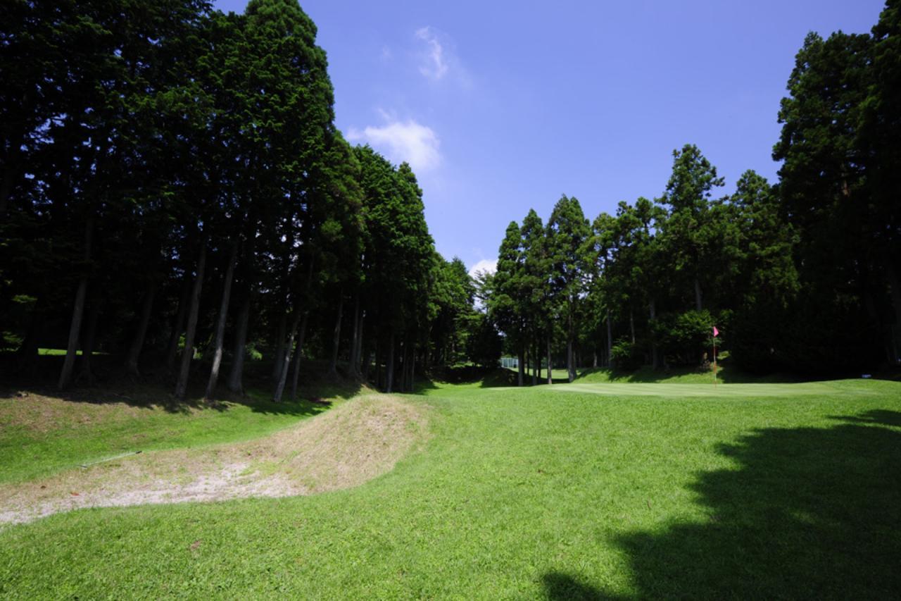 画像1: 御殿場の森をピクニックしてるみたい