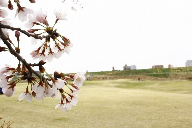 画像1: いよいよゴルフシーズン!新しくゴルフを始めませんか?