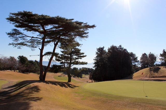 画像9: 駿河湾から春の風。沼津ゴルフクラブ