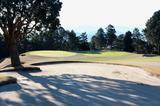 画像13: 駿河湾から春の風。沼津ゴルフクラブ