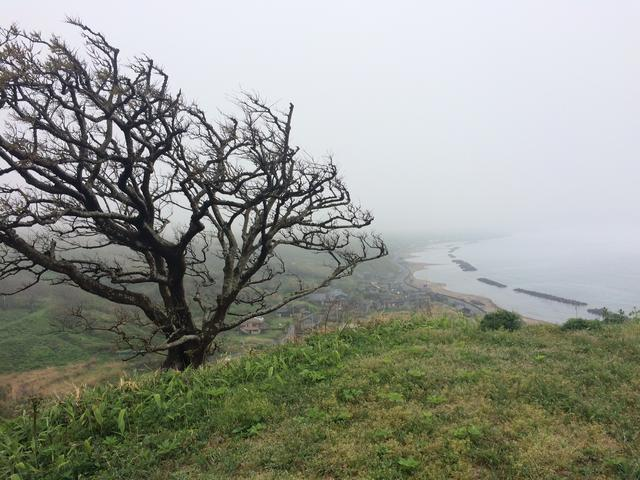 画像: 海風で木の枝も面白い形をしています。風が強い日はすごいんだろうな…。