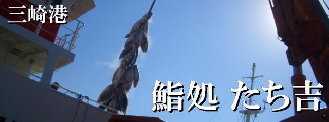 画像: 三崎港 くろまぐろ / すし処 たち吉 / 脂の乗った最高級の天然本まぐろ(クロマグロ)と漁港直送の地魚がおいしいお店 / 三浦半島 仕出し弁当ロケ弁当ご相談承ります! 釣った魚の持ち込み調理致します。 お気軽にお問合せ下さい。