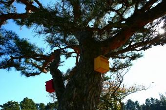 画像: 残り距離を示すヤード杭のかわりに置かれた小鳥箱が何ともカワイイです。ちなみにここは起伏があるせいか、距離感が惑わされがち。キャディさんの言うことをしっかりと聞きましょう(涙)。