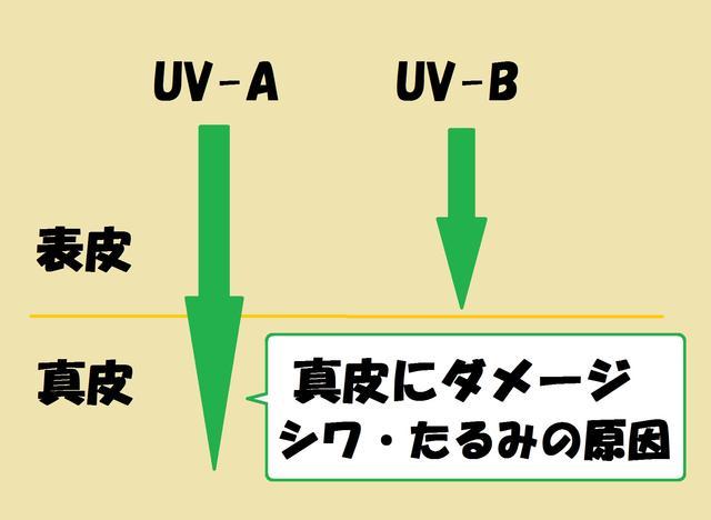 画像: 紫外線には2種類ある。より奥に届くのがUV-Aだ