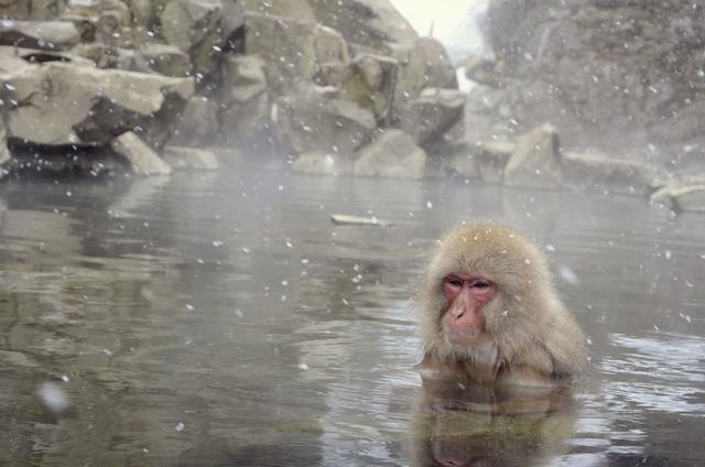 画像: サルは本能的にわかってる?!