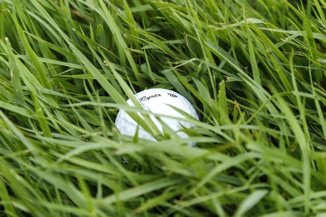 画像: 芝の寝方をよく見よう