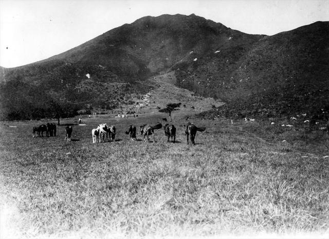 画像1: 日本一古いパブリックコース「雲仙ゴルフ場」