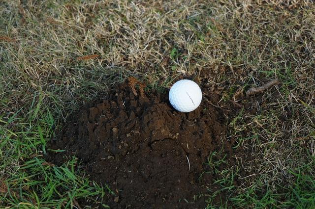 画像1: モグラの掘り跡にナイスオン! これ一体どうすればいいの?【ゴルフルールクイズ】