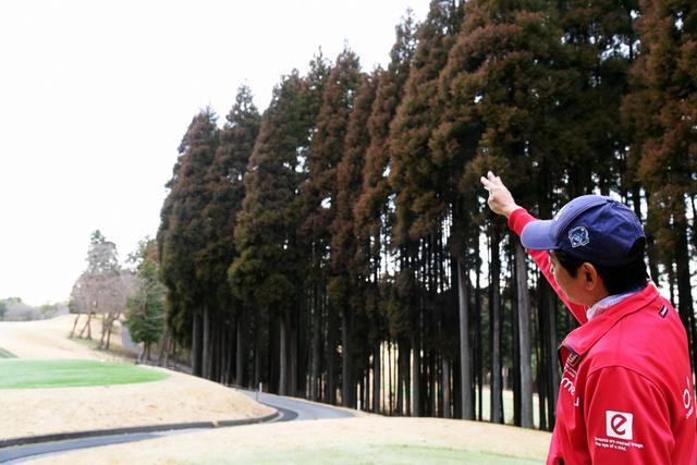 画像: 「遠くの木」を必ずチェック