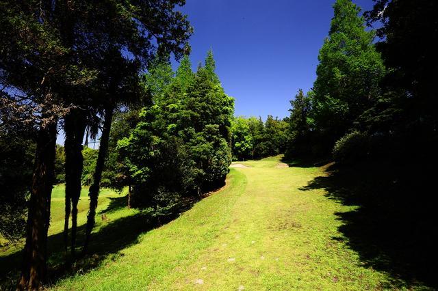 画像: 4番61ヤード、木と木の間を抜いて打つ