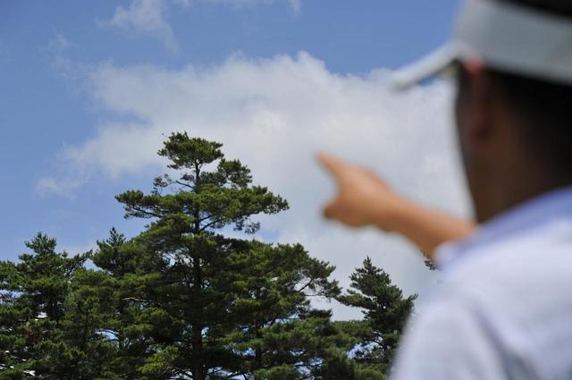 画像: 木の枝【信頼度70%】林の上にボールが出ると風に流される。木の枝の先を観察しておけば大きく間違うことはない